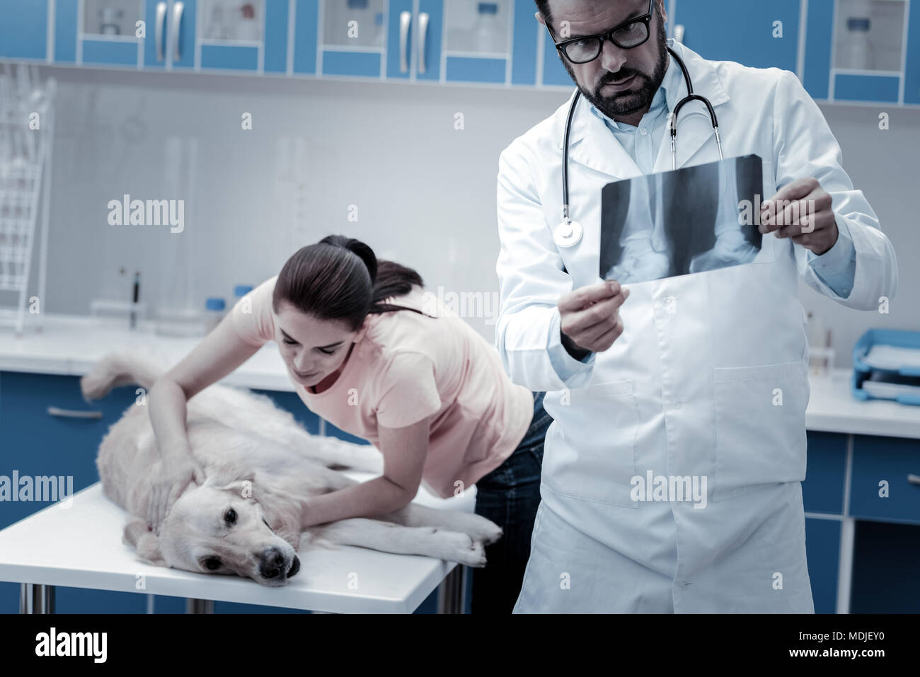 Smart professional veterinarian putting a diagnosis - Stock Image