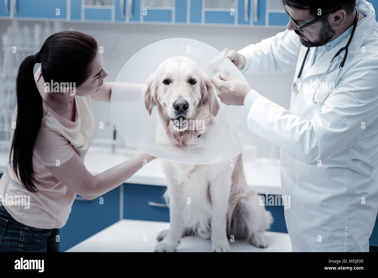 Nice cute dog wearing E collar - Stock Image