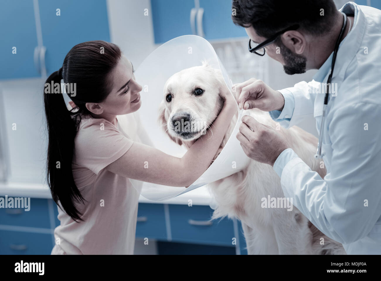 Nice young woman hugging her dog - Stock Image