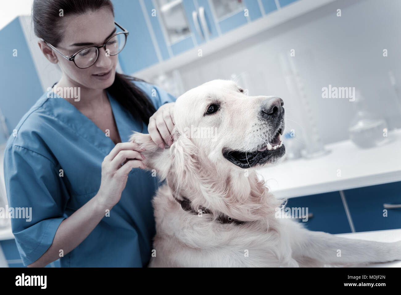 Nice young woman caring about the dog - Stock Image