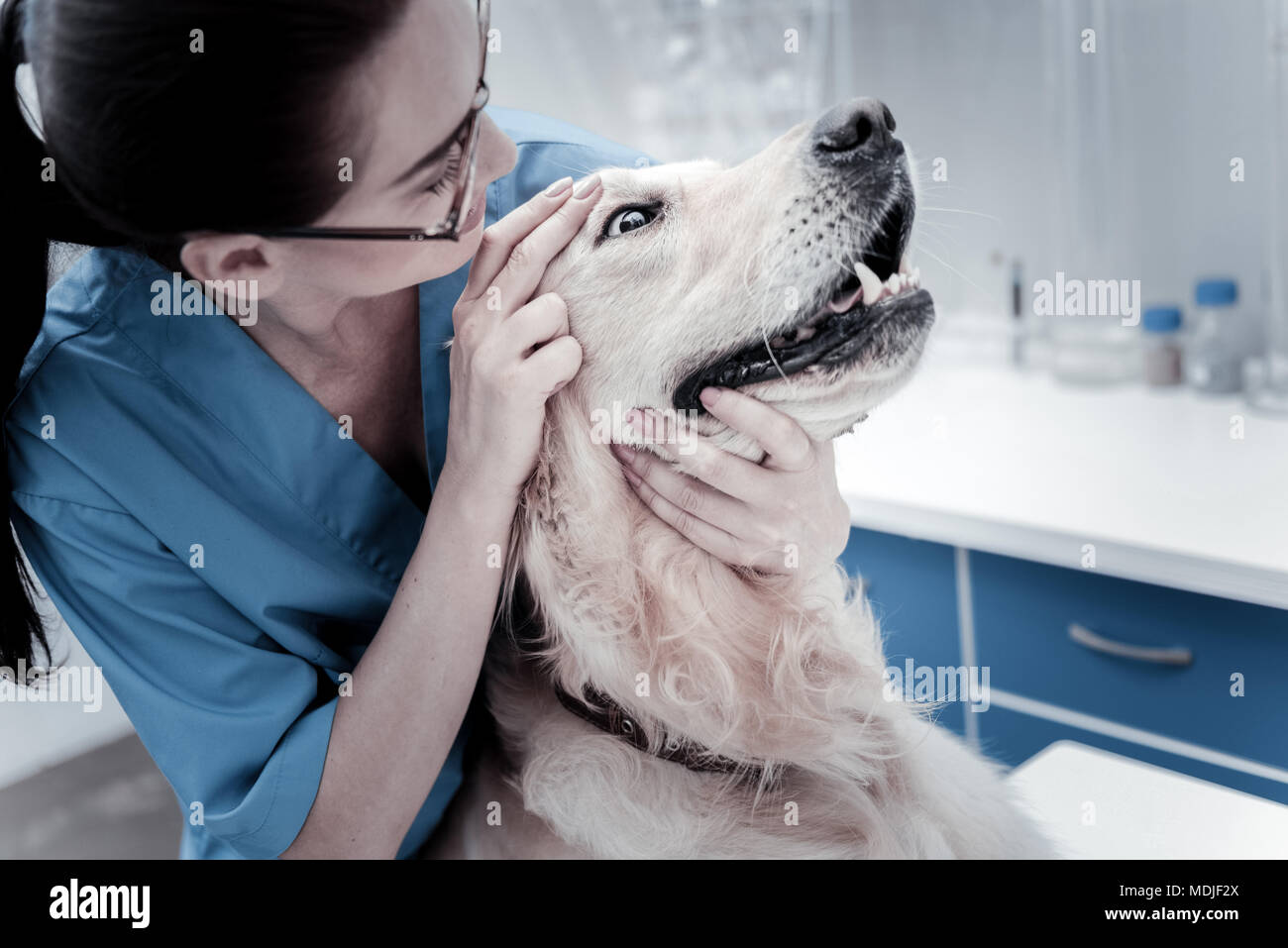 Pleasant smart woman examining the dog - Stock Image