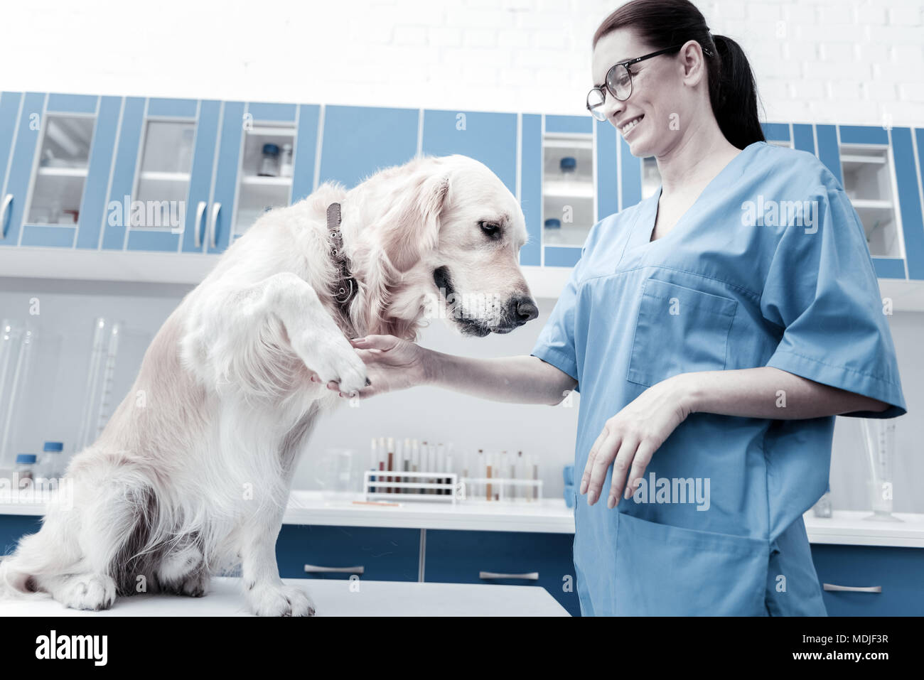 Positive young woman taking dogs paw - Stock Image