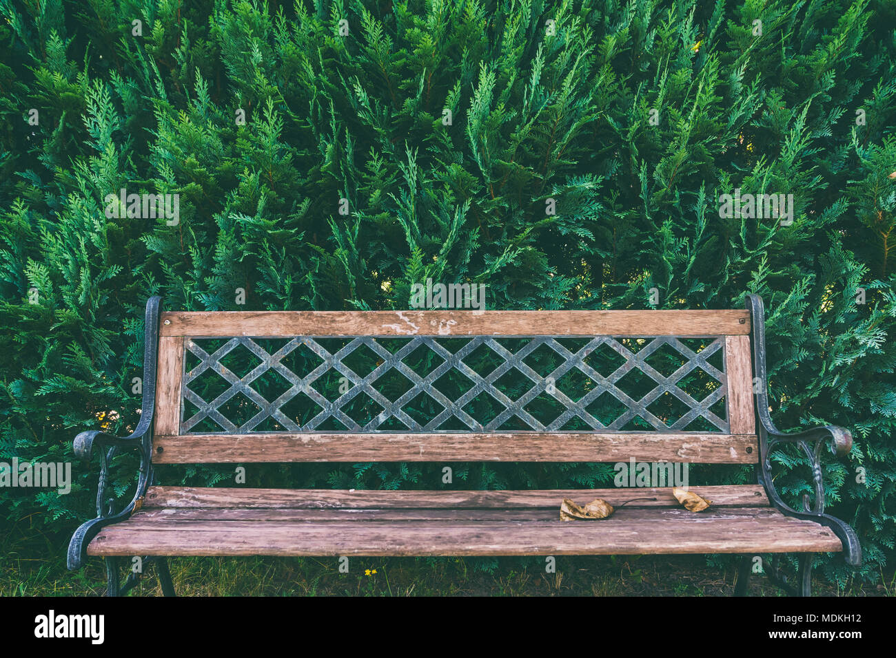 Old Style Park Bench In Front Of Hedge In Garden Stock Photo