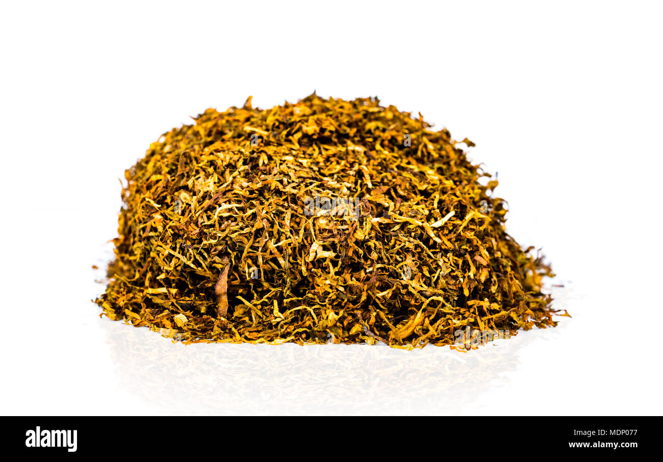 Pile of dried chopped tobacco leaves isolated on white background with copy space. Natural source of nicotine.  31 May : World no tobacco day concept. - Stock Image