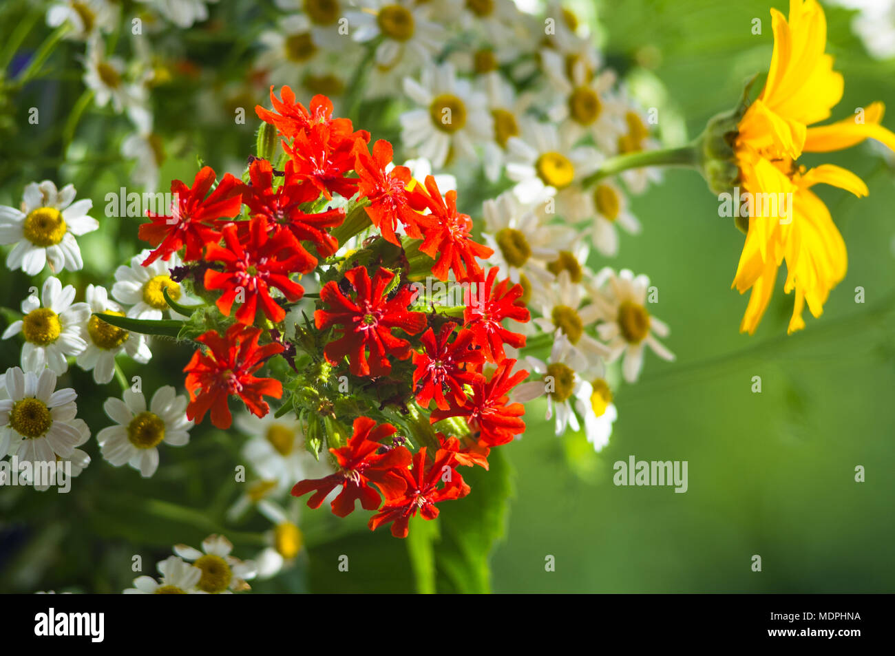 A colorful bouquet of bright spring flowers of various types close a colorful bouquet of bright spring flowers of various types close up mightylinksfo