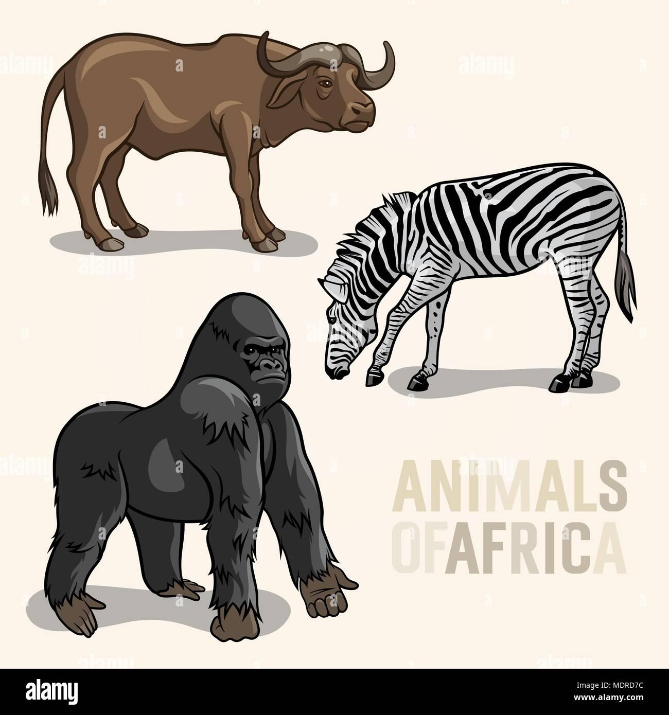 Vector set of African Animals. Gorilla, buffalo and zebra - Stock Image