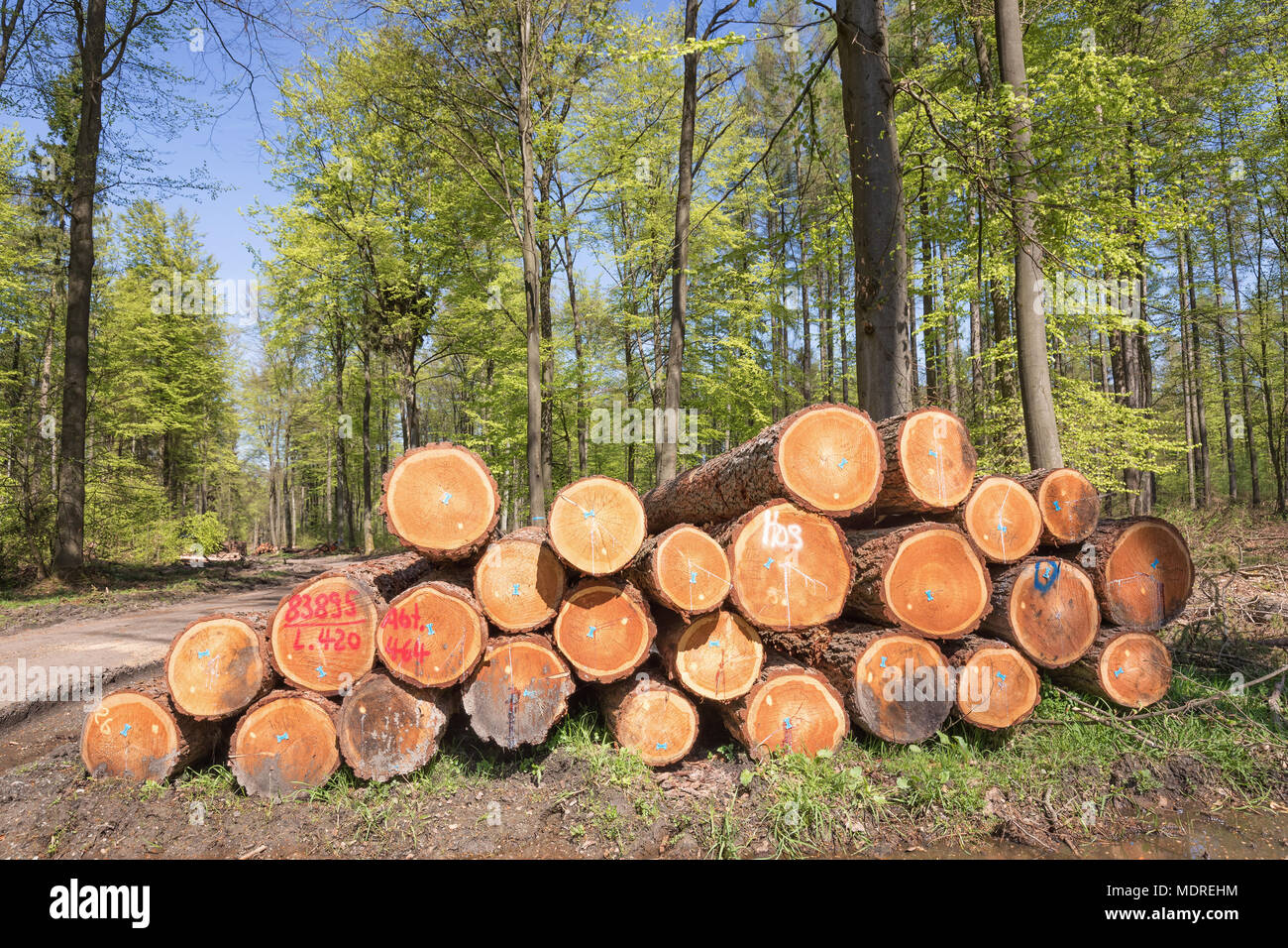 wooden batch in the forest - Stock Image