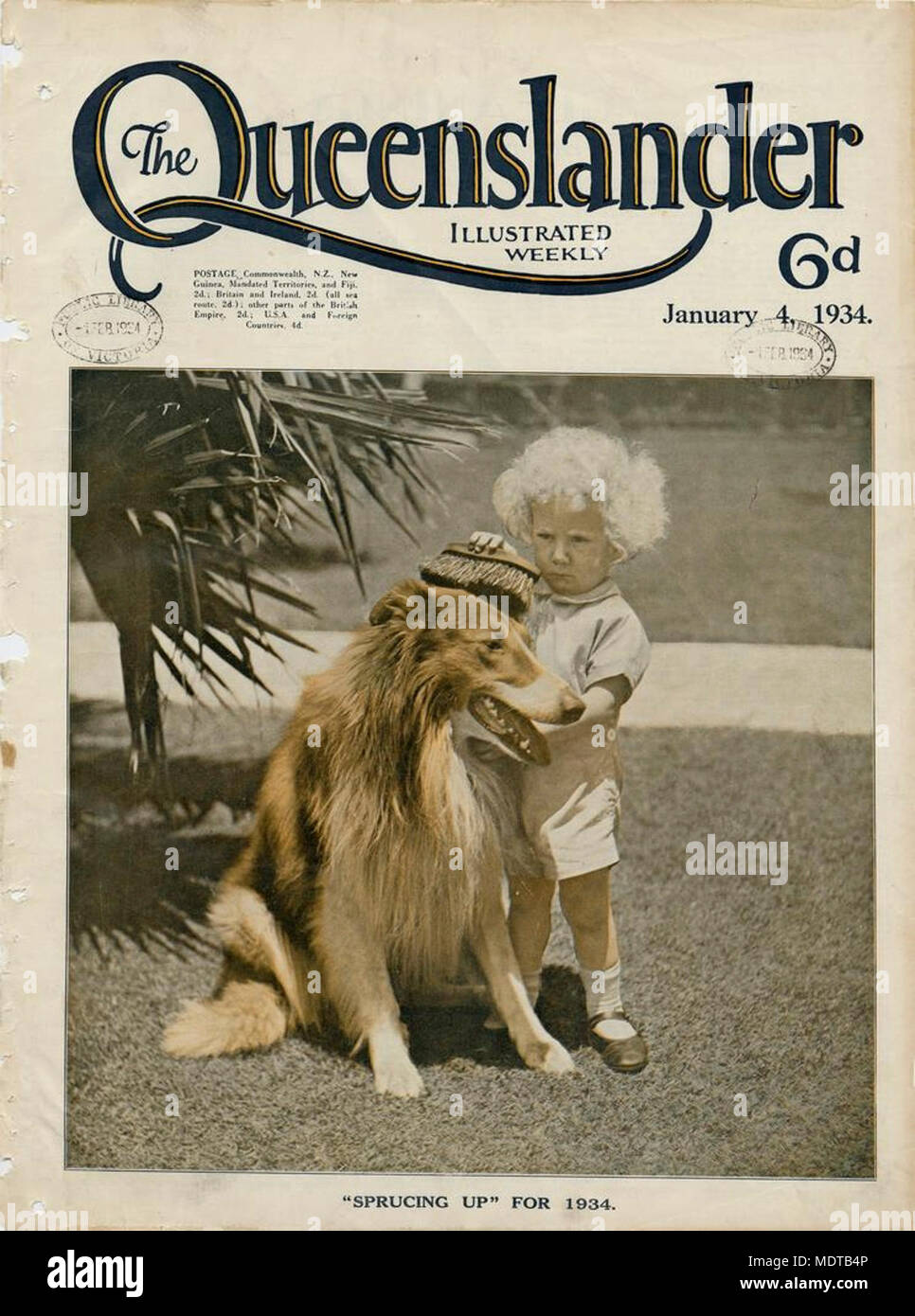 "Illustrated front cover from The Queenslander, January 4, 1934. Location: Queensland, Australia   Description: Caption: ""Sprucing Up"" for 1934 Picture of a child grooming a collie with a big brush. - Stock Image"
