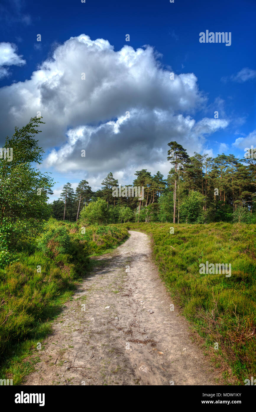 Winding path through the countryside on a summers day, with blue skies and white fluffy clouds - Stock Image