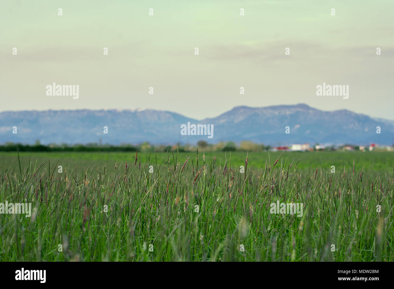 countryside nature of Tirana Albania - Stock Image