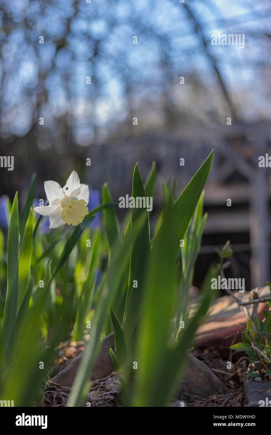 First Flower Of Spring Stock Photo 180664665 Alamy