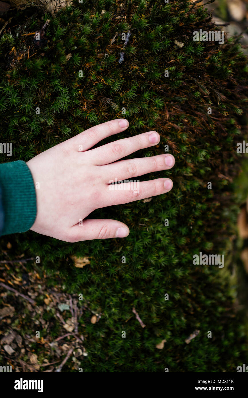 Child in nature touching green carpet - Stock Image