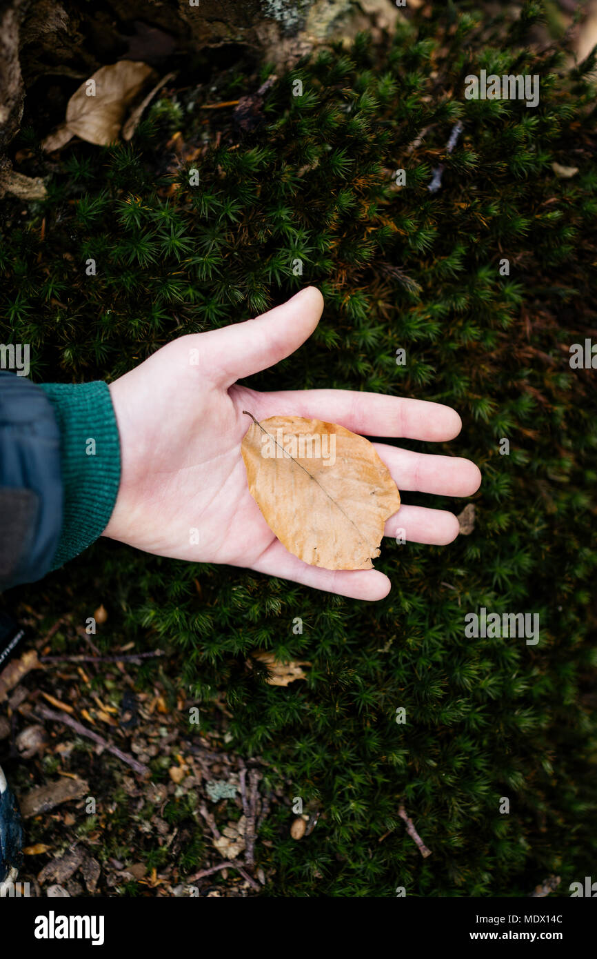Child in nature holding leaf - Stock Image