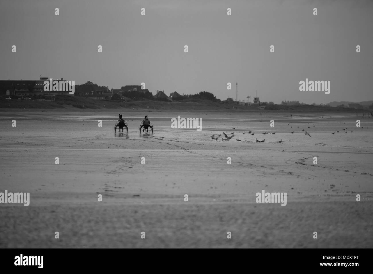 France, bieville quetieville, stud farm de pitz, stable danover, stephane provoost, trotting training on the beach of merville Franceville, - Stock Image