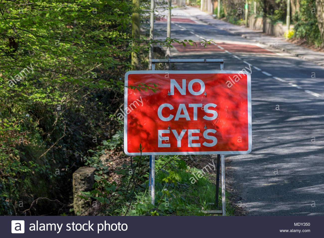 Ambiguous roadsign 'no cats eyes' - Stock Image