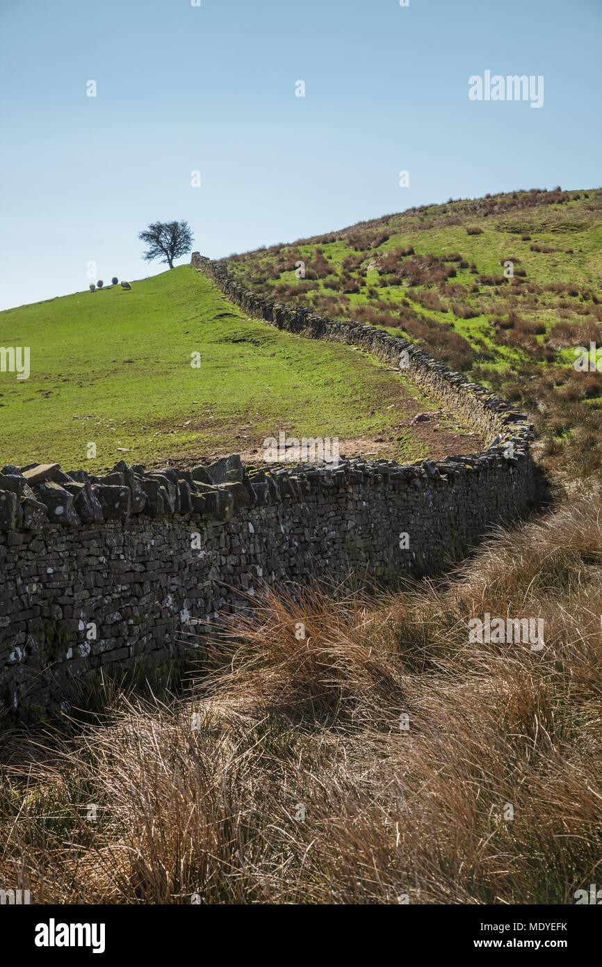 Dry Stone Wall in the Talybont Valley in the Central Brecon Beacons - Stock Image