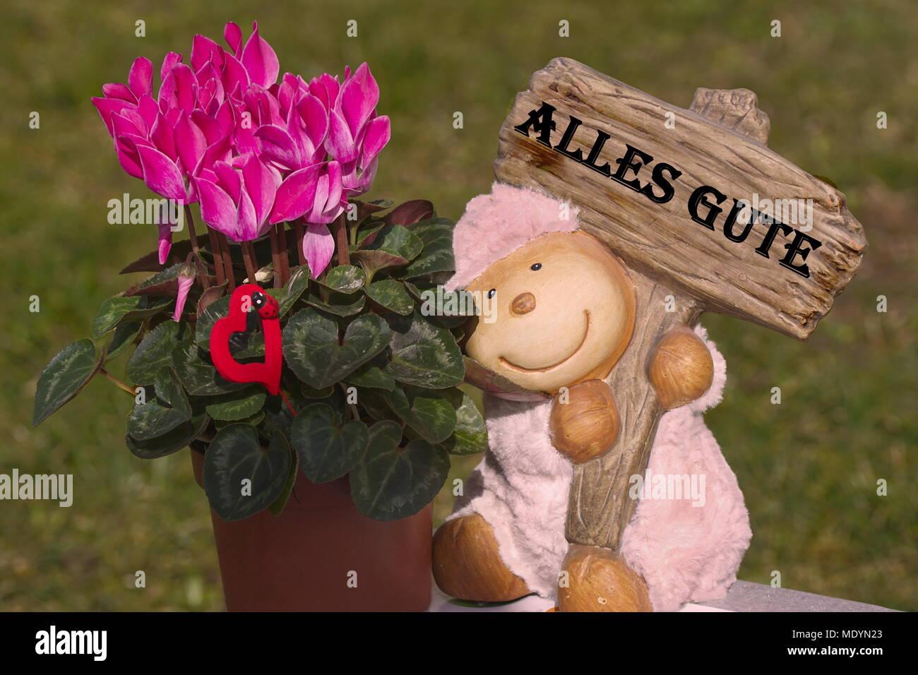Alles Gute Glückwünsche mit Alpenveilchen und Schäfchen Stock Photo