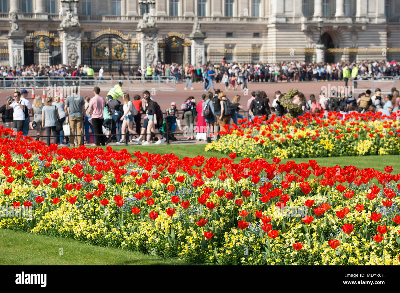 20 April 2018. Hot Spring weather in Green Park with tulips on display outside Buckingham Palace, London, UK - Stock Image