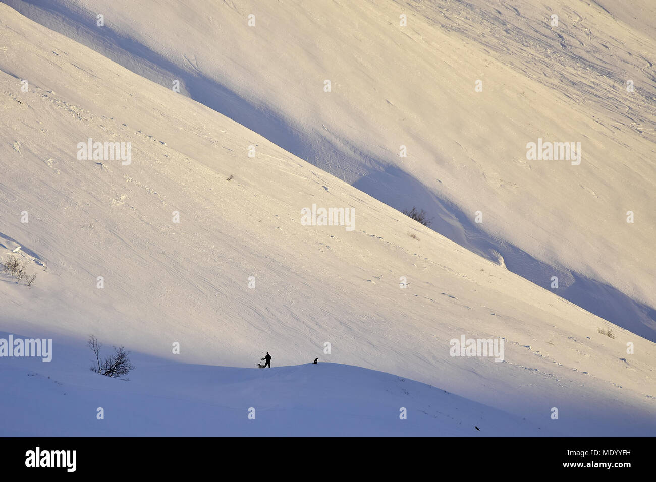 A snowshoer makes his way along the fresh powder in Hatcher Pass, Alaska, with his dogs. - Stock Image