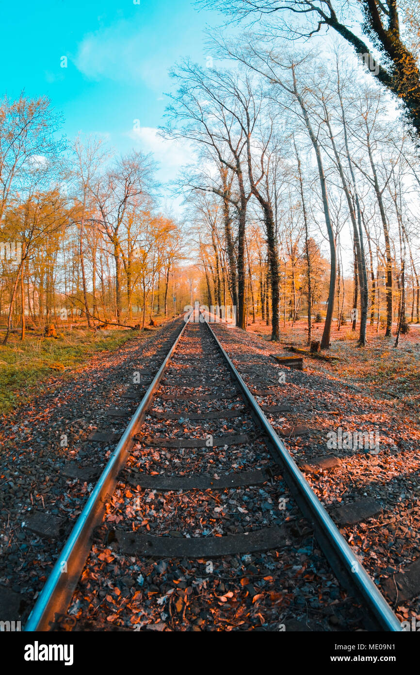 Rail track through forest in Germany, Cologne, Köln Lindenthal - Stock Image