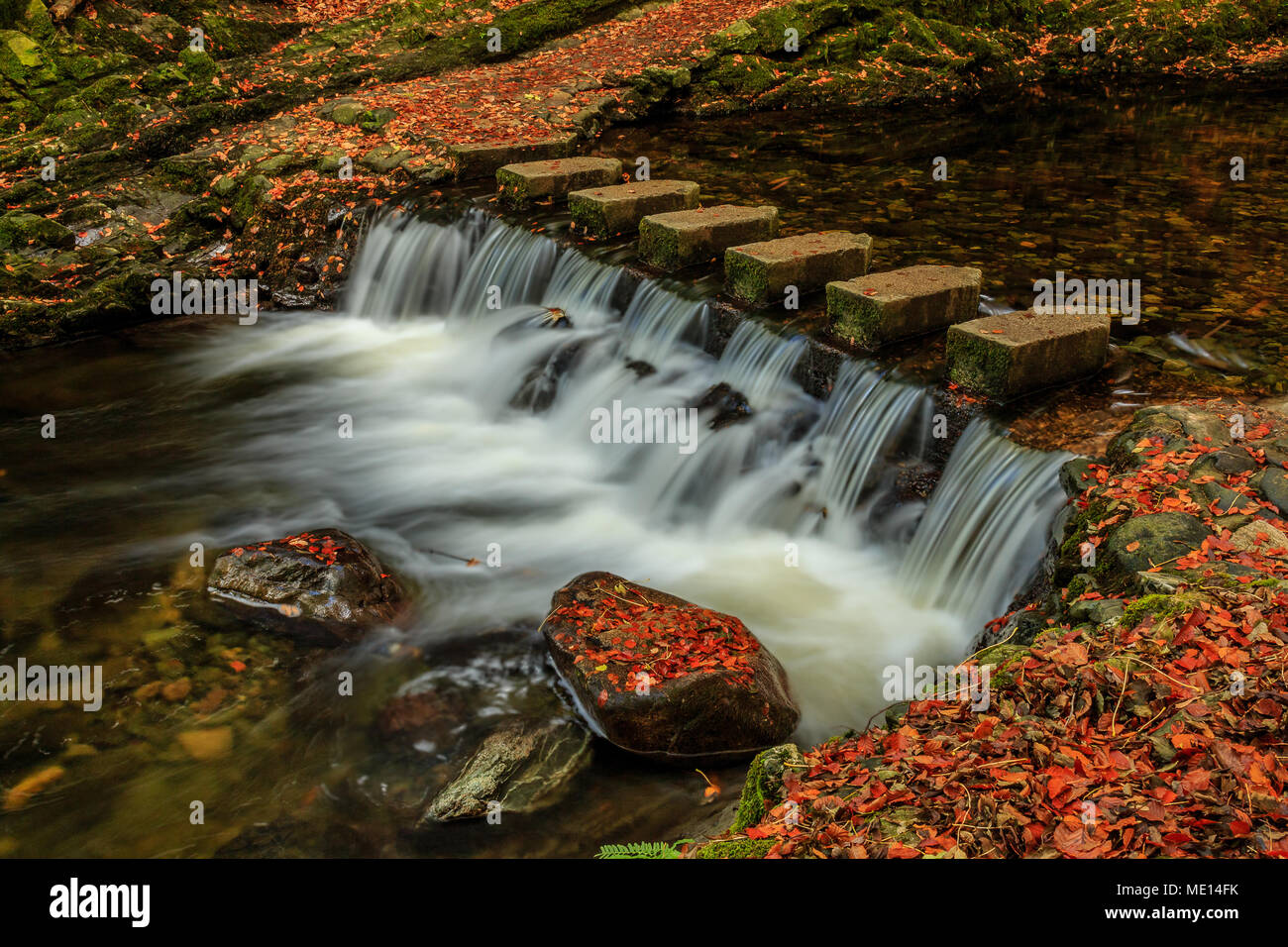 The well-known stepping stones across the Shimna River in Tollymore Forest Park, County Down, Ireland, in Autumn. - Stock Image