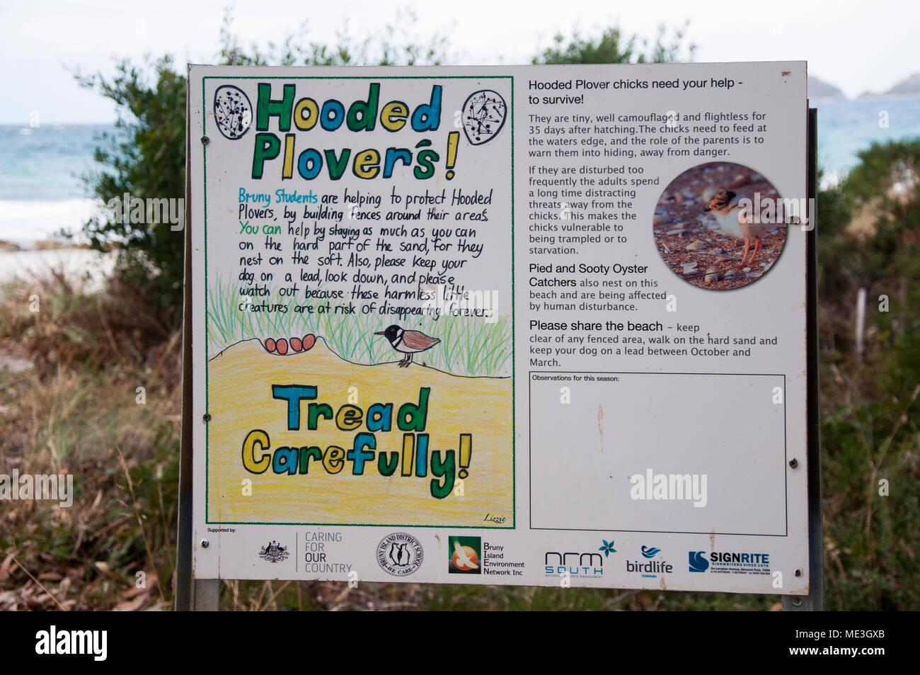 Hooded plover conservation initiative by local schoolchildren at Adventure Bay, Bruny Island, Tasmania, Australia Stock Photo