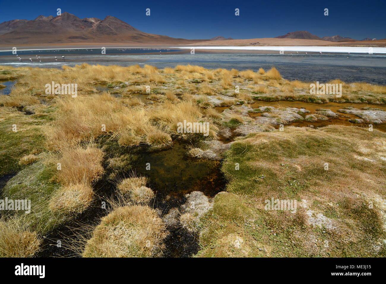Laguna Canapa. Potosi department. Bolivia - Stock Image