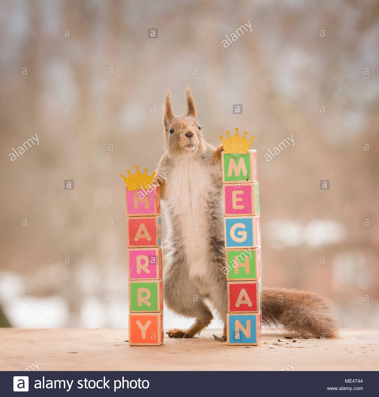 red squirrel and blocks and royal names - Stock Image
