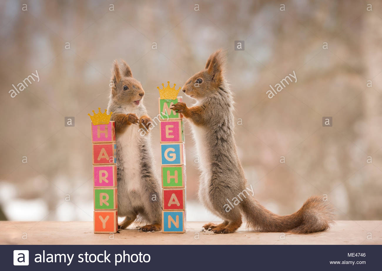 red squirrels and blocks and royal names - Stock Image