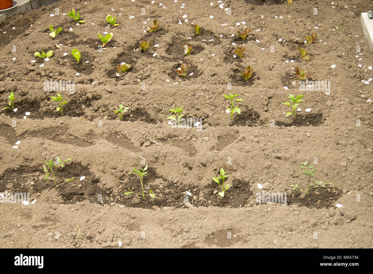 Ecologic and biologic yard agriculture - Stock Image