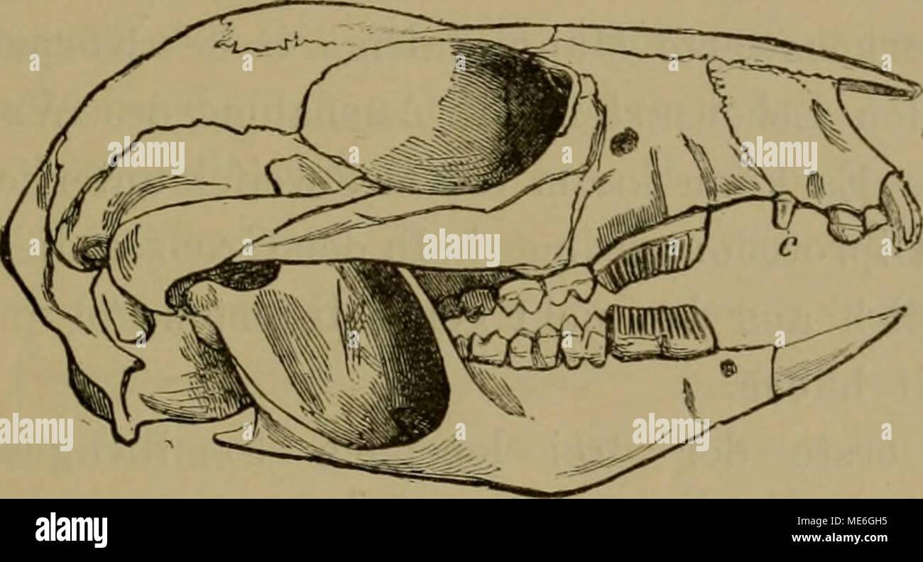 Beste Anatomie Des Icr Zeitgenössisch - Anatomie Von Menschlichen ...