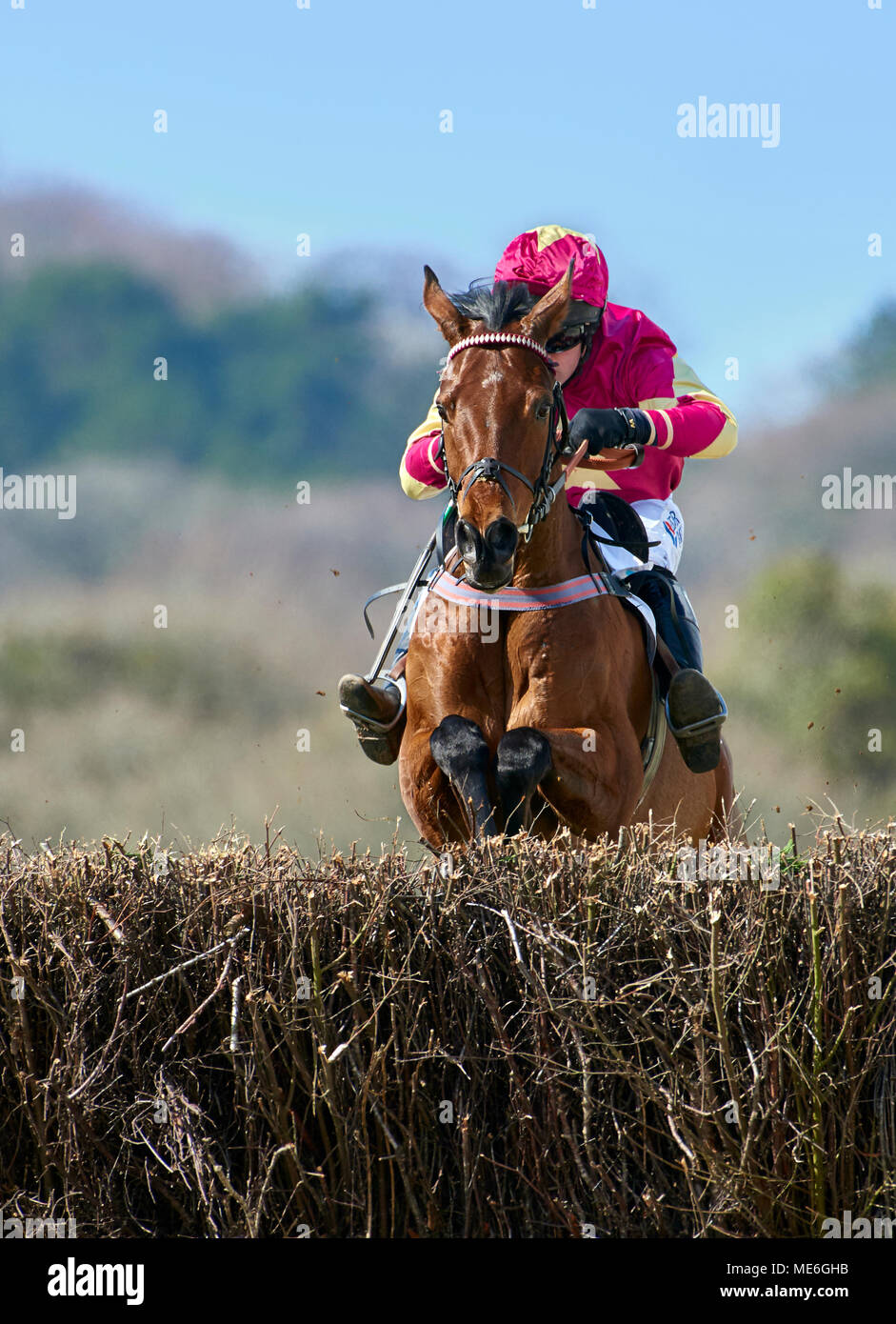 Horse and rider jumping a fence during a point-to-point event - Stock Image