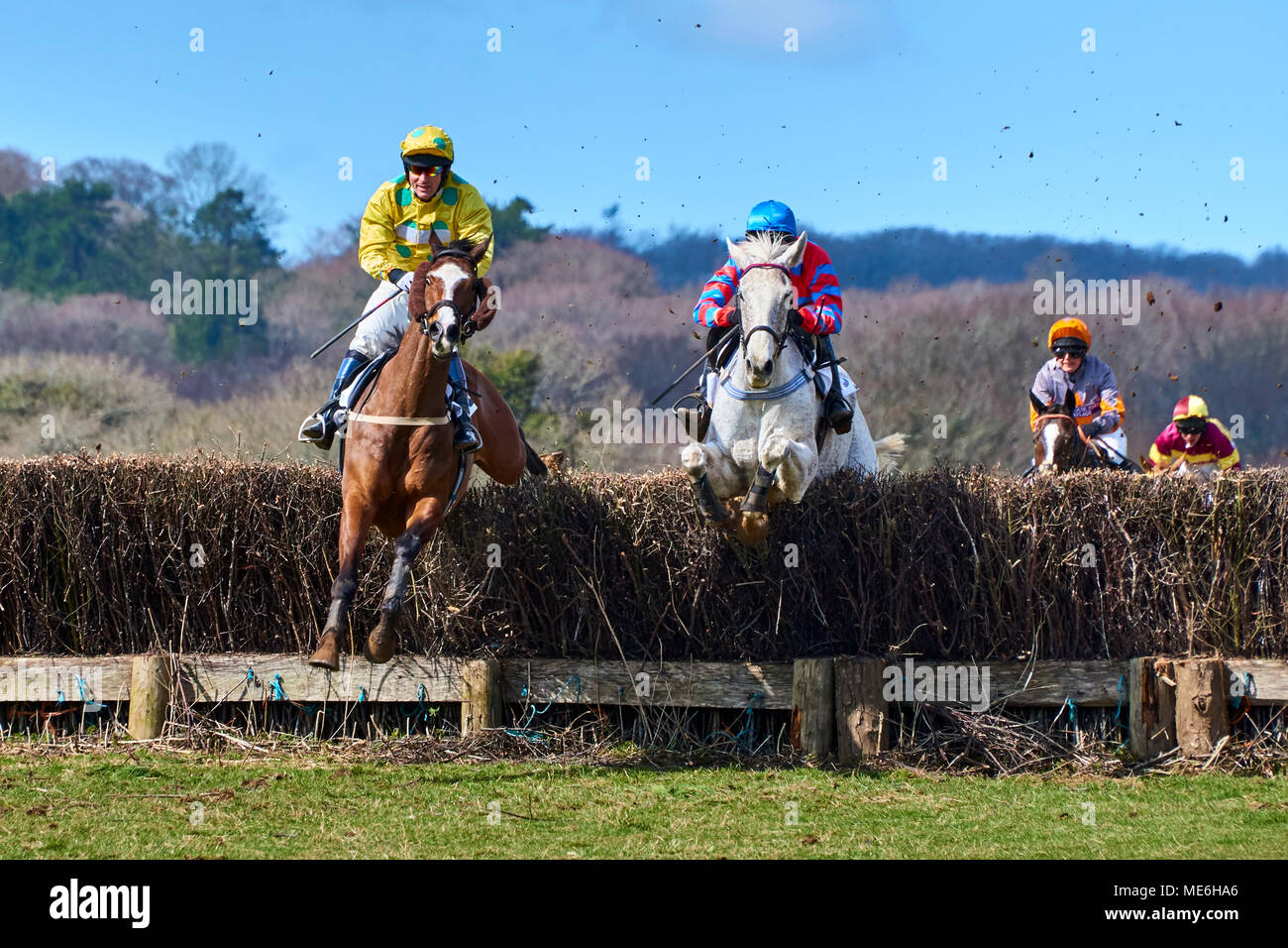 Two horses and riders jumping a fence during a point-to-point event Stock Photo