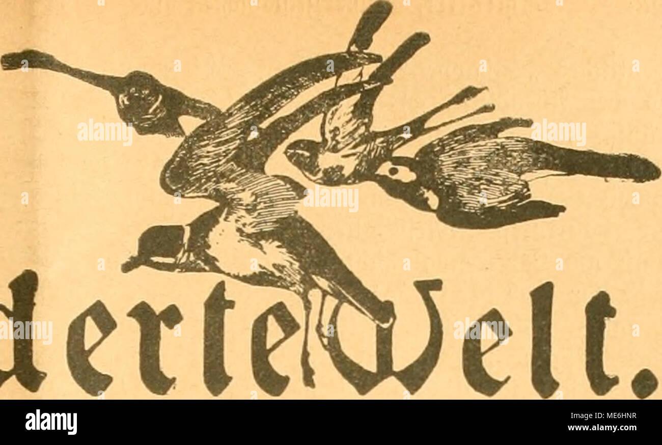 . Die Gefiederte Welt . iedette älocbenfcbrift für Vogelliebbaber. ^Jlctne ^eijigjudjien im g>ommet 1916. iöon Stöbert öd)mibtül, stod. theol. et phil. (9?adit>rucf »erbotrn. /CV? mar im äRärj biefe« 3af)«§, als aud) id) Vfc^ ernftlid baran beuten lniiüte, meine flehte ÜBoget» liebljaberei attfjulöfen. 'Senn ?lnfang Sttprit, fo E)örte man allenthalben, foHte aud) mein öafjraang ein* berufen werben. Unb fo muffte id) fte beim alle fdmeren §erjen§ Rieben (äffen fetjen, meine fdjönen, fobeUoä gepflegten gefteberten ßieblinge. 9htr ,m>ei Reifigmännd&en, ein ^änfling fomie ein @tiegli  - Stock Image