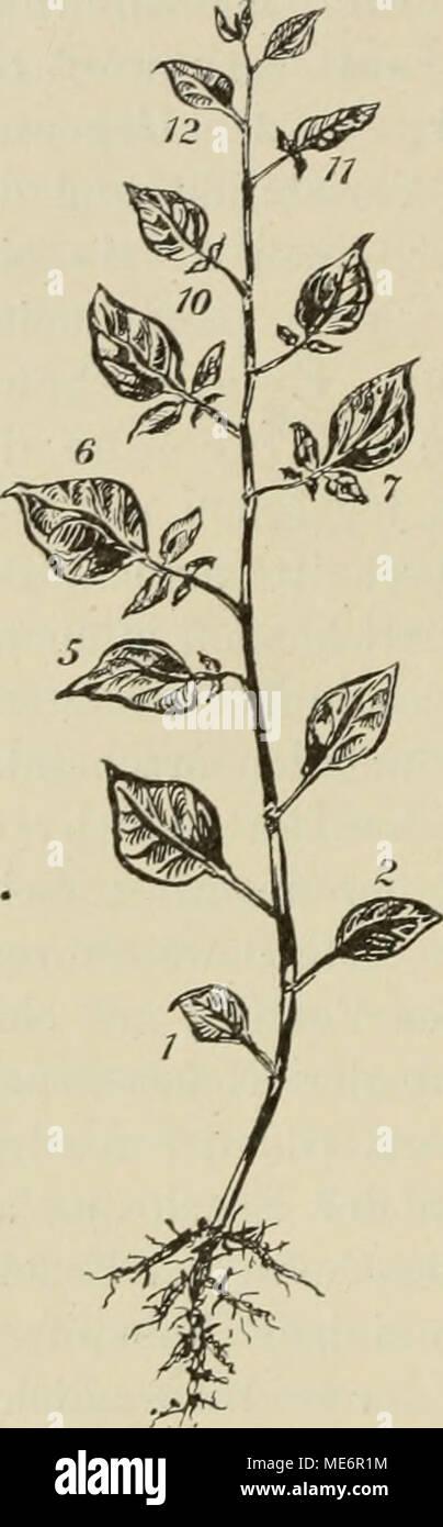 Berühmt Pflanzenanatomie Und Morphologie Ideen - Anatomie Ideen ...