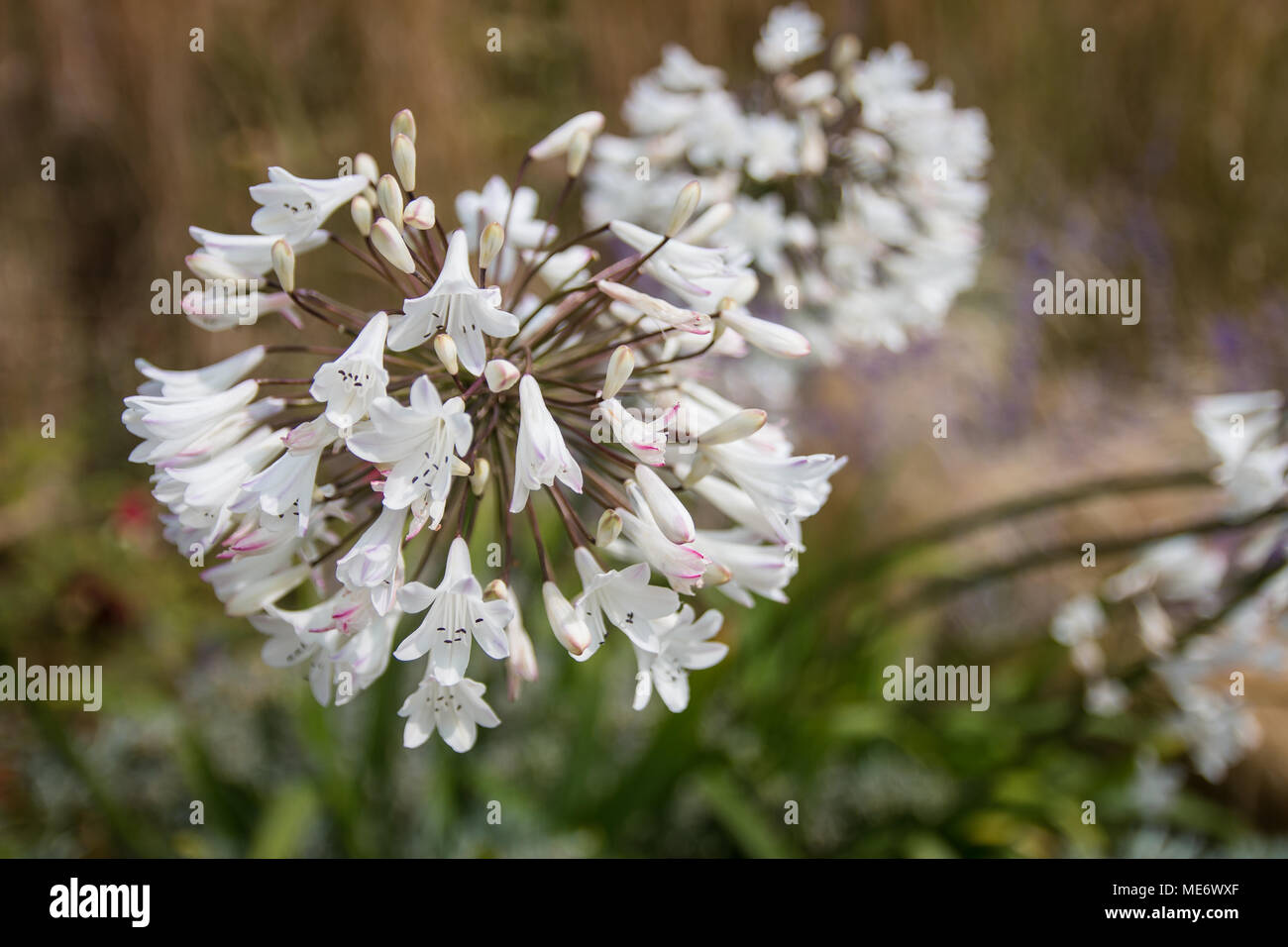 Flower creation stock photos flower creation stock images alamy english country garden provides the perfect opportunity to photograph some beautiful flowers stock image izmirmasajfo