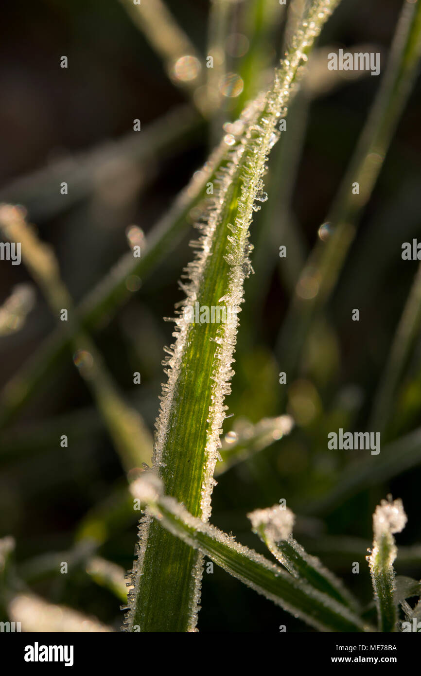 Frost abtract - Stock Image
