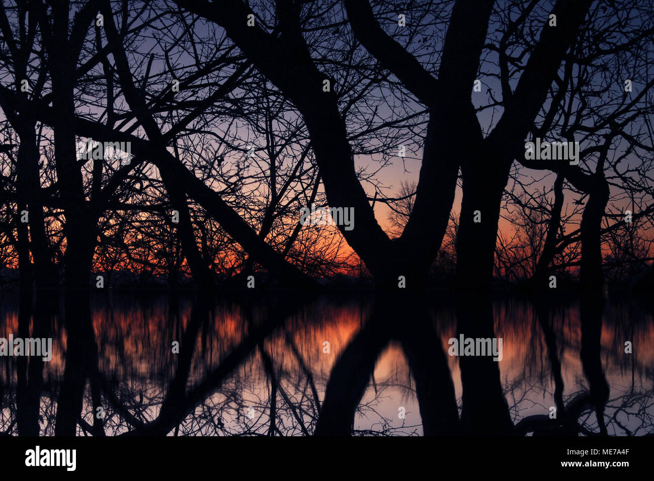This photos of beautiful trees is there for you to show you how our world looks like just before the sun rise. Having this photo you will feel lucky. TRUST ME - Stock Image