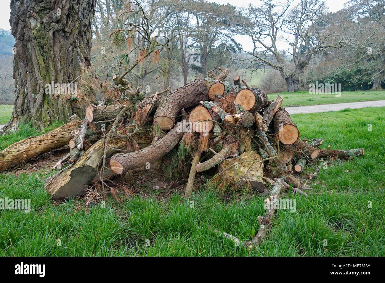 wildlife habitat pile, wildlife habitat management, wildlife log pile, - Stock Image