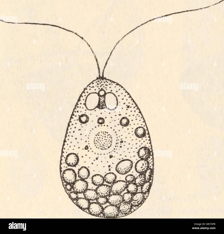 Wunderbar Anatomie Und Physiologie Studie Spiele Bilder ...