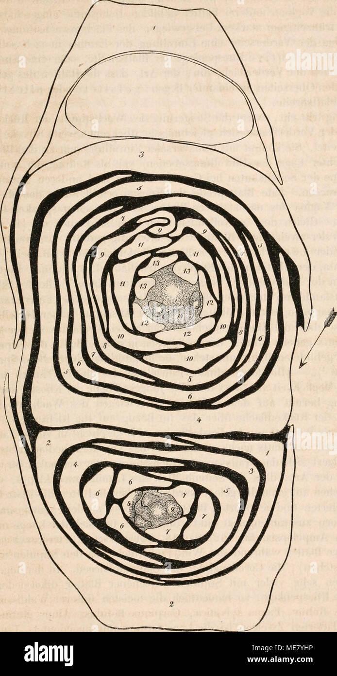 Erfreut Pflanzenzelle Anatomie Fotos - Menschliche Anatomie Bilder ...