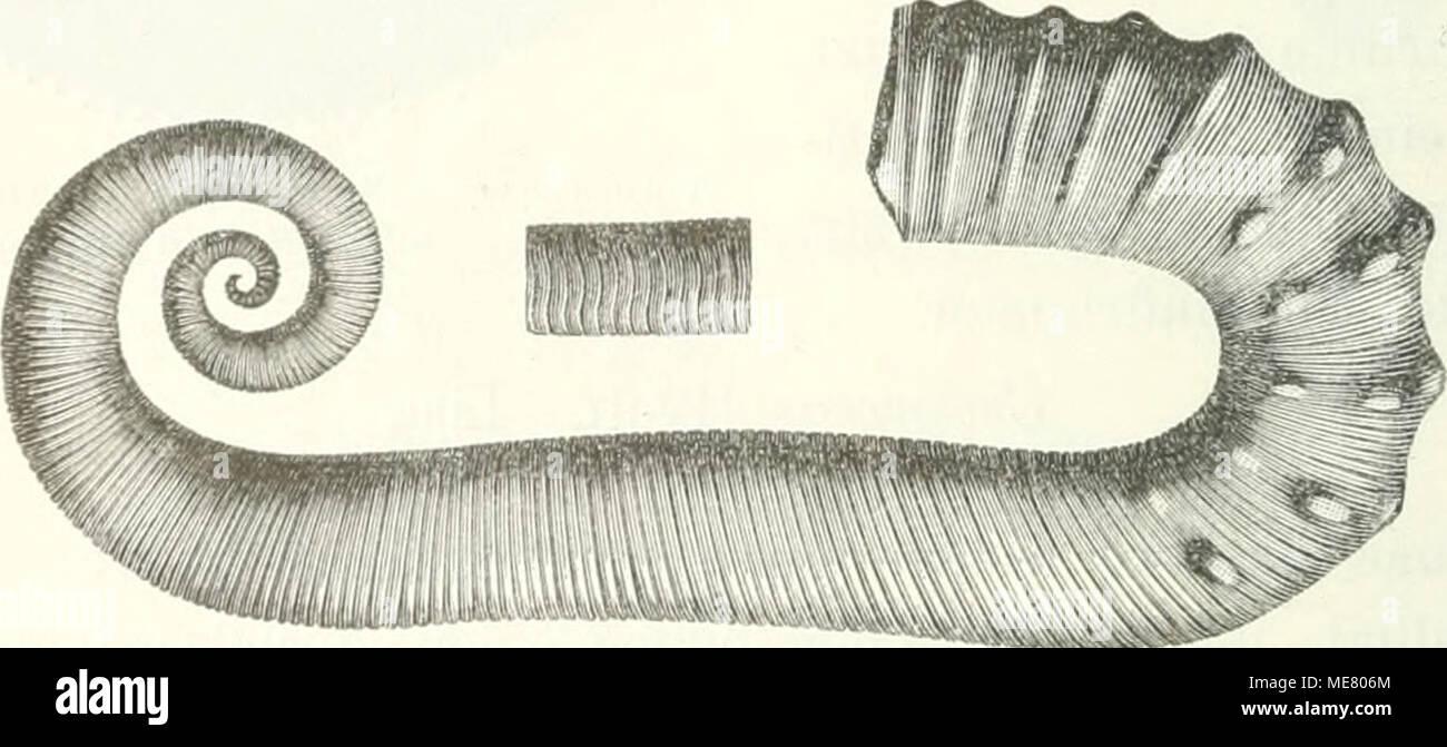 die ein handbuch fr den unterricht und fr das bestimmen von with rohrspirale anleitung