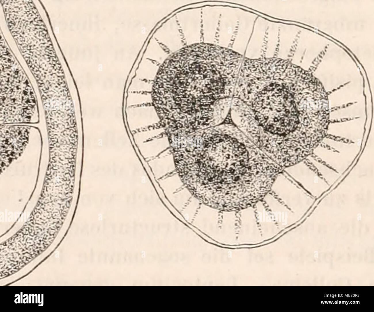Charmant Anatomie Einer Pflanzenzelle Fotos - Menschliche Anatomie ...