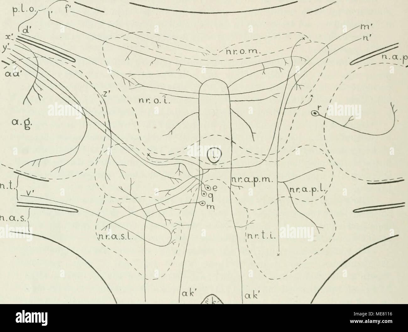 Ausgezeichnet Ct Lungenarterie Anatomie Galerie - Anatomie Ideen ...