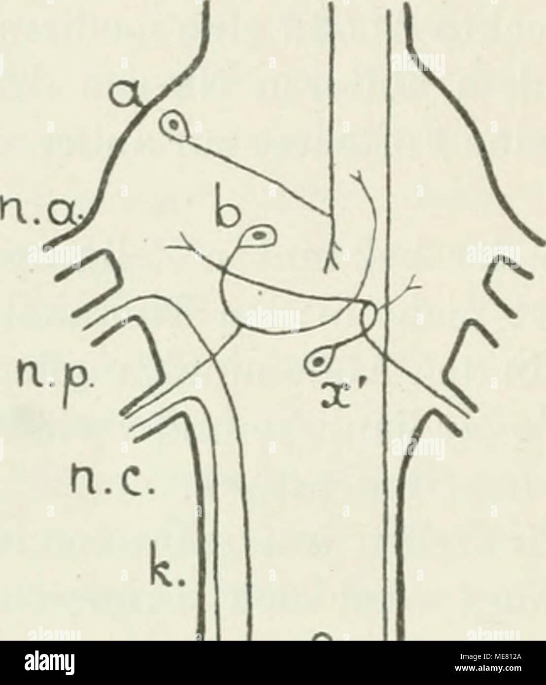 Fein Nervensystem Quiz Anatomie Und Physiologie Ideen - Menschliche ...