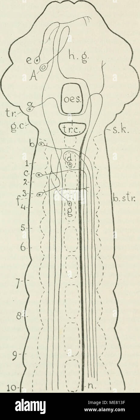 Ziemlich Zentralvenensystem Anatomie Fotos - Menschliche Anatomie ...