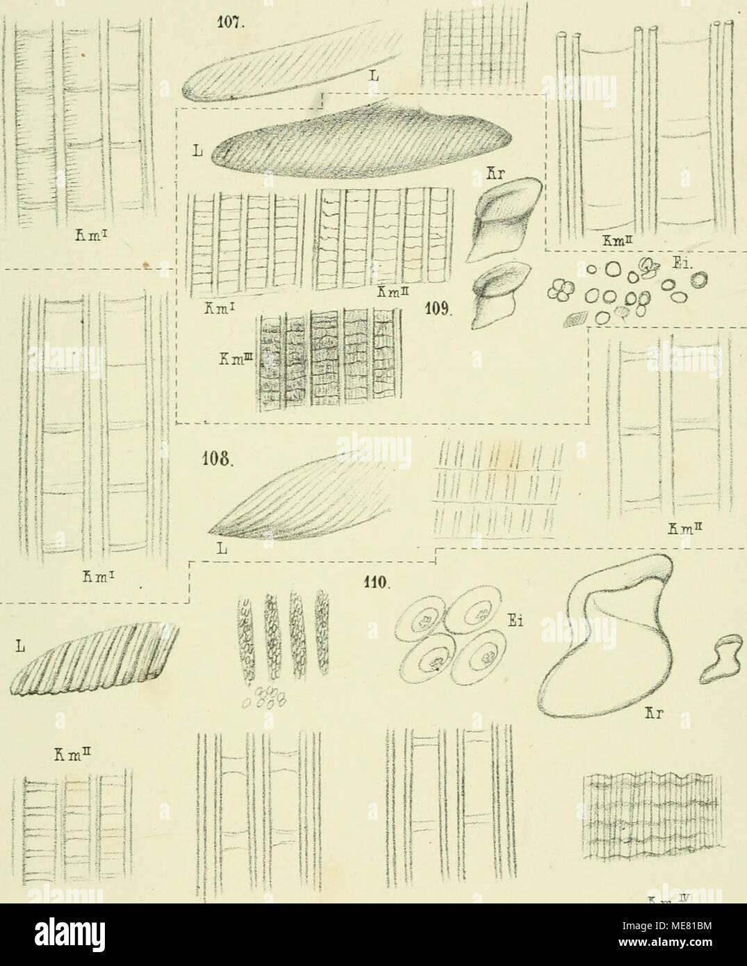 Wunderbar Anatomie Und Terminologie Ideen - Anatomie Ideen - finotti ...