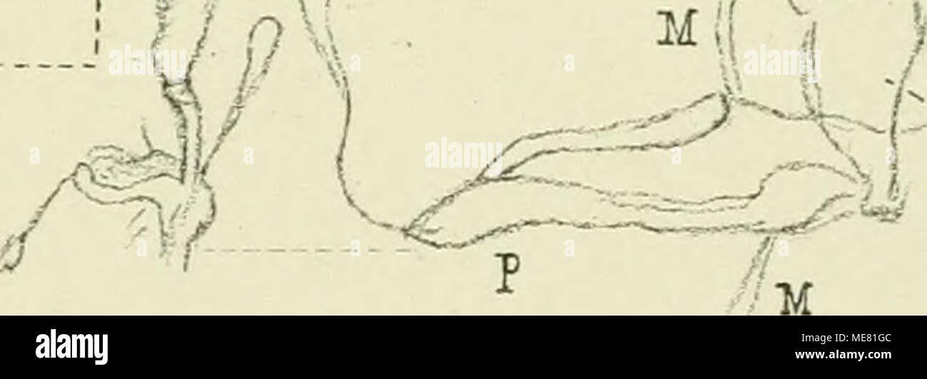 Wunderbar Vollmuskel Diagramm Bilder - Anatomie Ideen - finotti.info