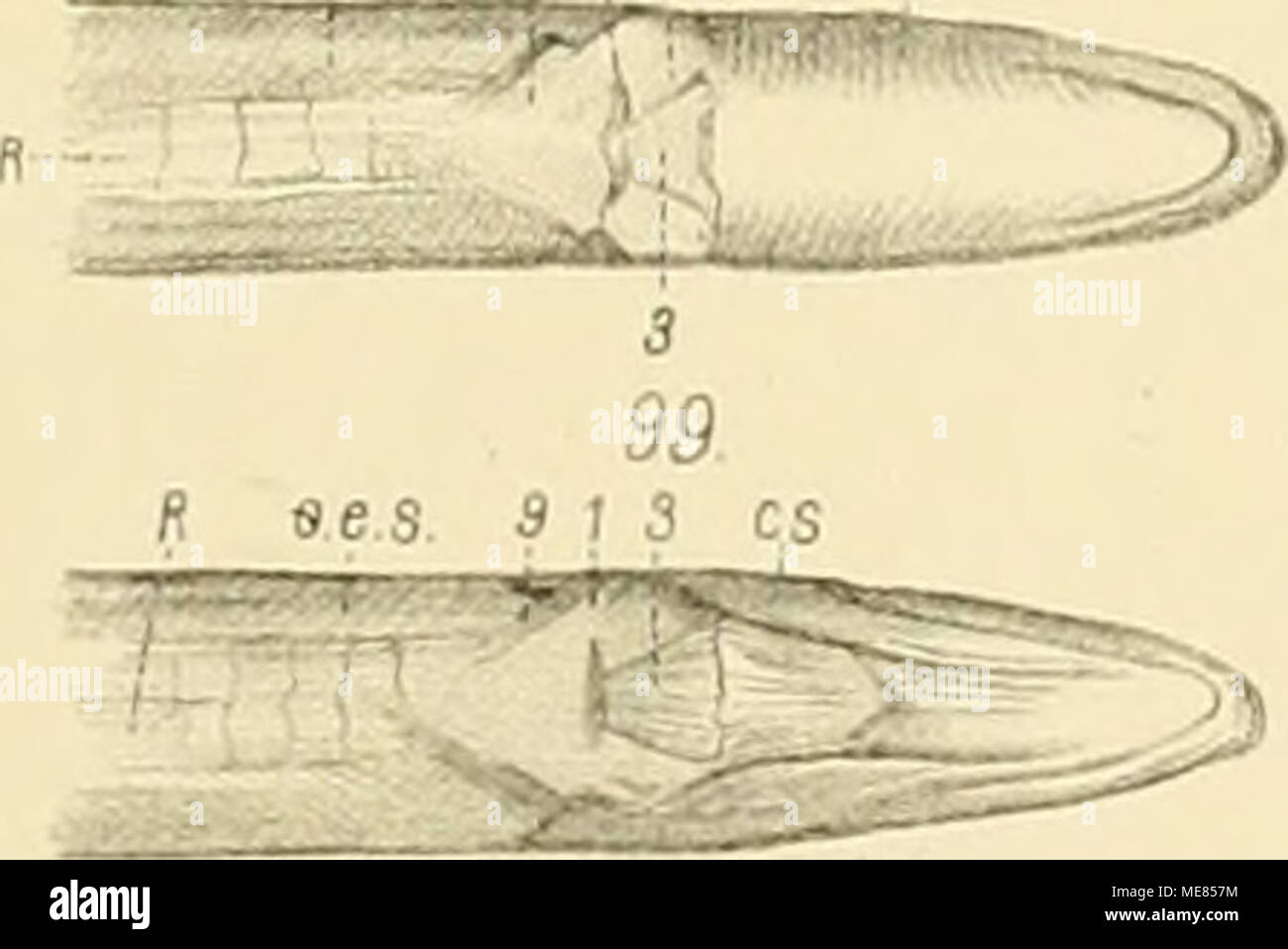 Bookyear1870 Stock Photos & Bookyear1870 Stock Images - Alamy