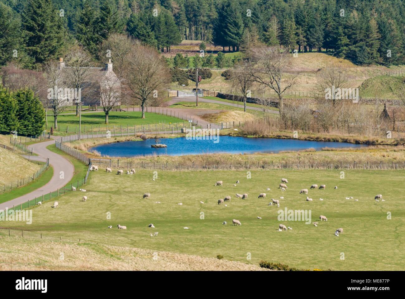Farm House Scottish Borders Stock Photos & Farm House Scottish Borders Stock Images - Alamy